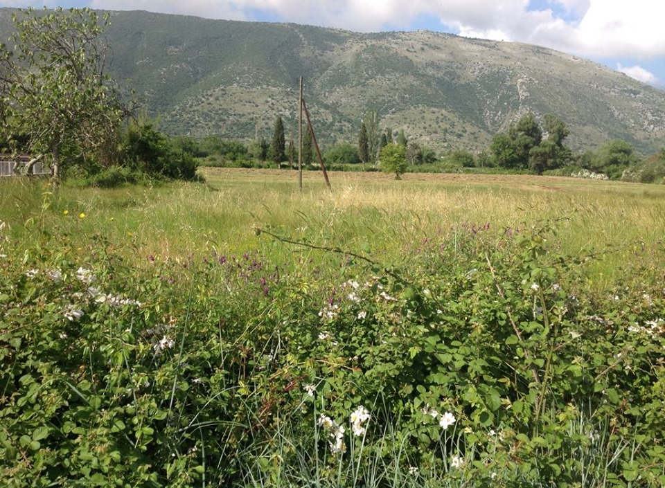 For sale agricultural land  4.700m2 in Faskomilia 65.000 Euro.(083)